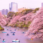 best place to see cherry blossom in japan