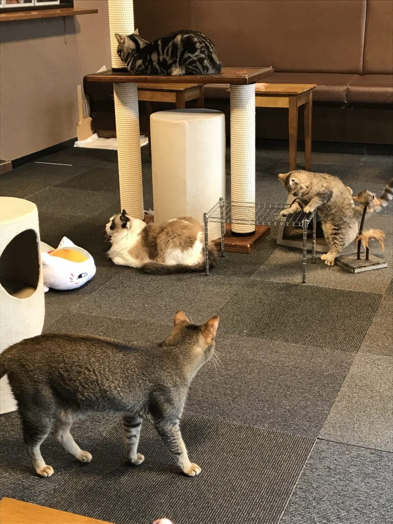15 Cutest Cat Cafe Tokyo Put This List In Your Pocket Question Japan